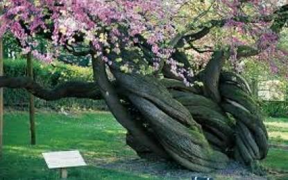 La plantation des arbres à racines nues