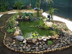 comment planter des plantes aquatiques