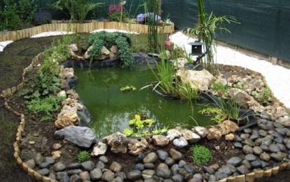 Avoir un beau jardin aquatique