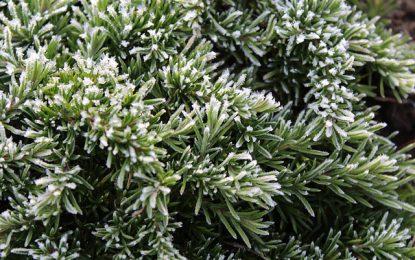 Plantes vivaces couvre sols : lesquelles choisir ?