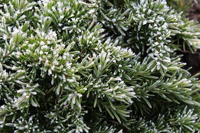 plantes vivaces couvre sol quelles plantes choisir comme couvre sol le jardinier. Black Bedroom Furniture Sets. Home Design Ideas