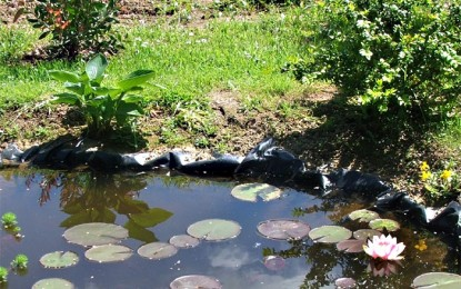 Bassins : soins d'été