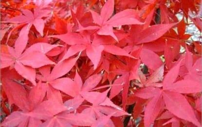 Quel arbuste décoratif choisir ?