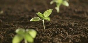 germination 1