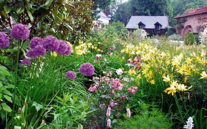 La plantation au jardin