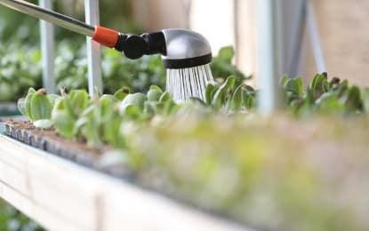 Économiser l'eau dans son jardin