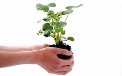Jardinage écologique : les principes de base