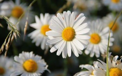 Le top 10 des plantes nécessitant peu d'entretien