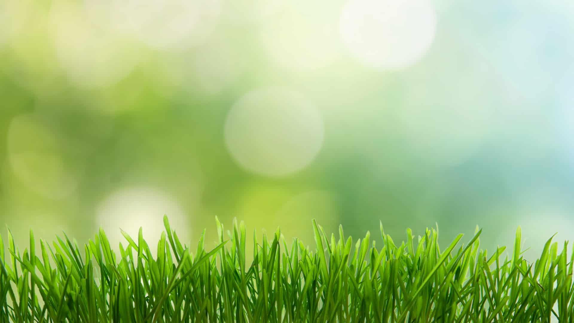 Entretien du jardin conseils pour entretenir son jardin for Conseil du jardinier