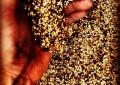 Les propriétés du houblon : une plante qui soulage les troubles digestifs et de la ménopause