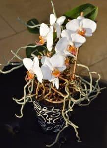 Comment planter une orchidée