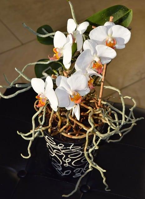 planter une orchid e comment planter et rempoter une. Black Bedroom Furniture Sets. Home Design Ideas