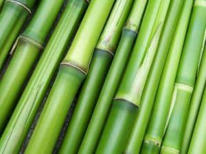 Caractéristiques bambou