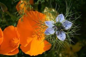 La significations des fleurs - La langage des fleurs - le ...