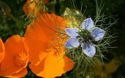 La signification des fleurs : percez le langage des couleurs