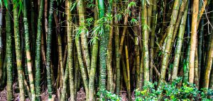 tailler un bambou
