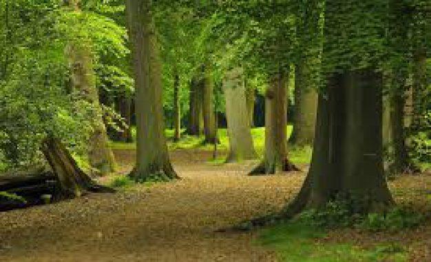 Comment entretenir une forêt privée ?