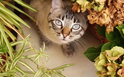 Phytothérapie pour animaux : les plantes qui apaisent les chats