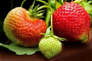 quand planter un fraisier