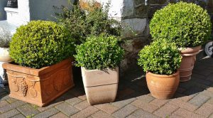 plante brise-vue pour balcon