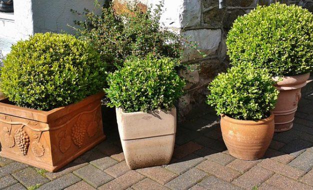 Quelle plante brise vue pour balcon choisir ?