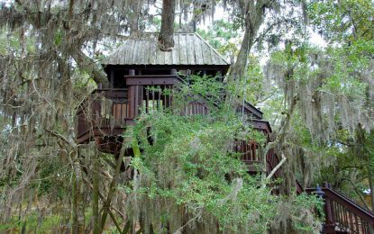 Comment entretenir une cabane dans les arbres ?