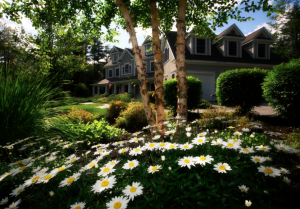 Jardin fleuri avec marguerites et grands arbres en fond