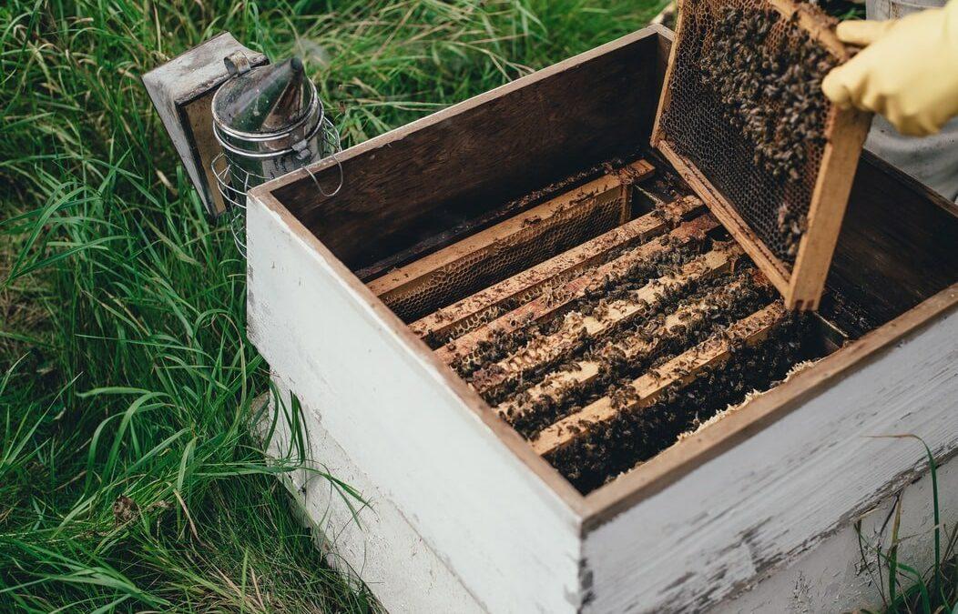 Comment installer une ruche dans votre jardin?