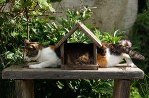 Un chat coincé dans une cabane d'oiseaux
