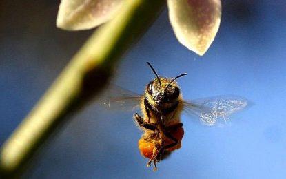 Où installer des ruches ?